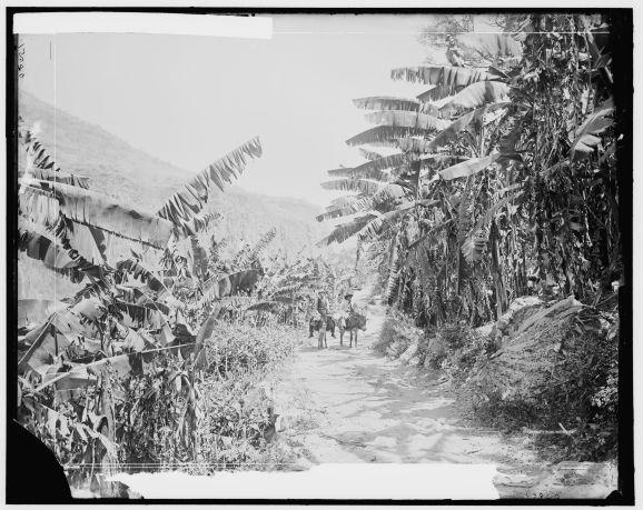 Platanar en la Barranca de Huentitán.